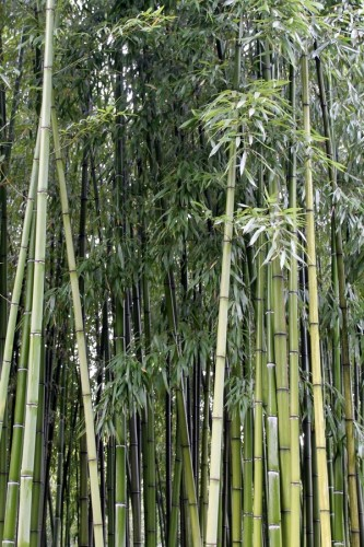 Villa Angerer bambù