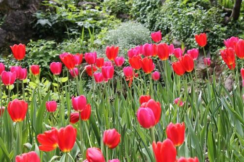Heller Garden Gardone - Tulipani