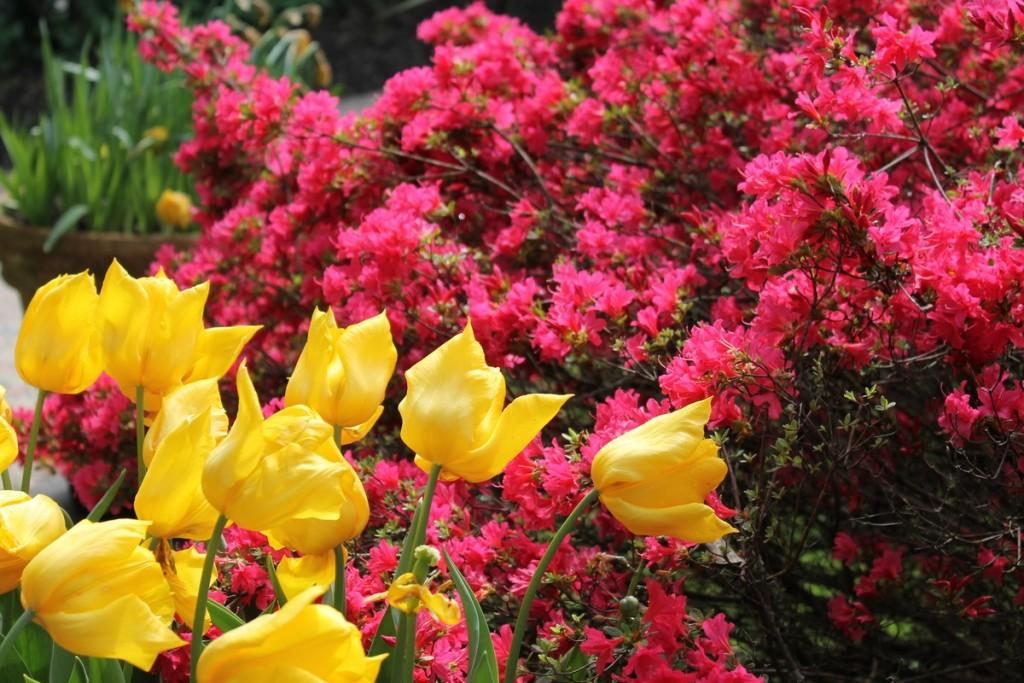 Heller Garden Gardone - Colori