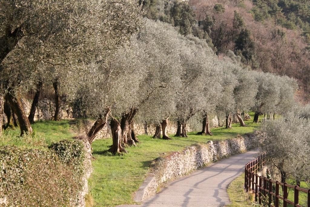 L'olivaia di Torbole