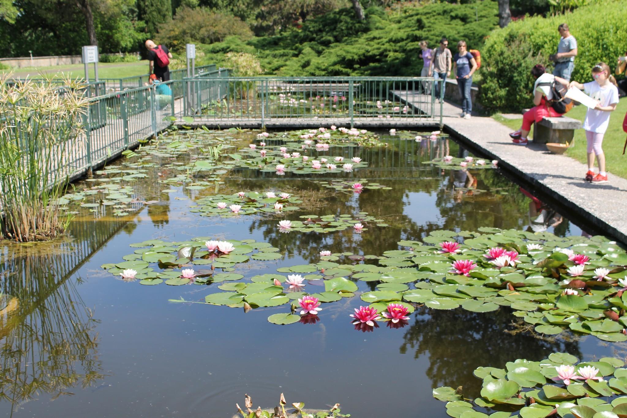 Il parco giardino sigurt e la tulipanomania for Immagini di laghetti