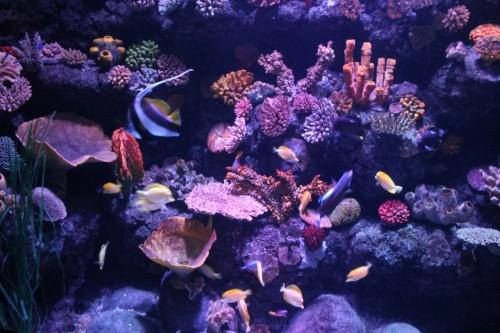 Sea Life - Pesci tropicali