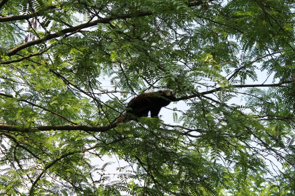 Parco Natura Viva Panda