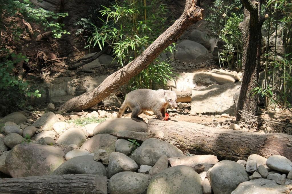 Parco Natura Viva Coati