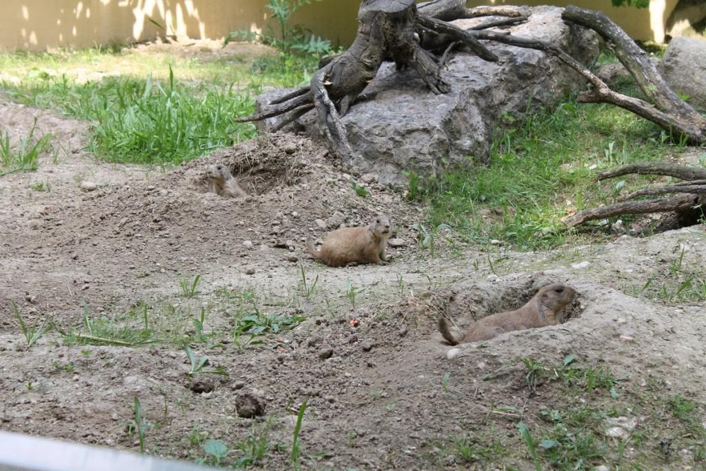 Parco Natura Viva Cani prateria