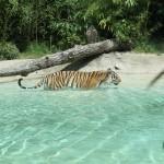 Il Parco Natura Viva di Verona, molto più di uno zoo safari!