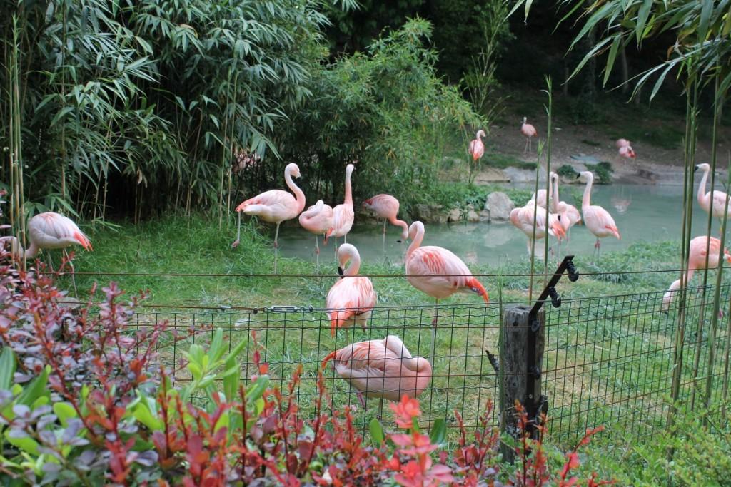 Parco Natura Viva Fenicotteri