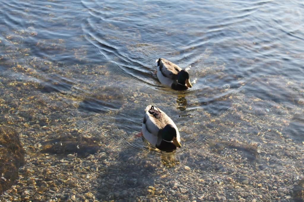 papere spiaggia lago