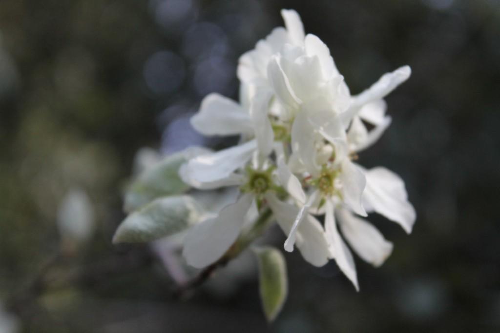 fiori monte baldo