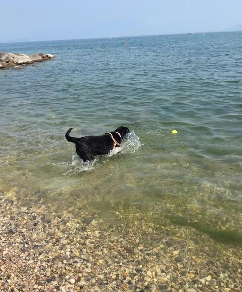 spiaggia cani garda