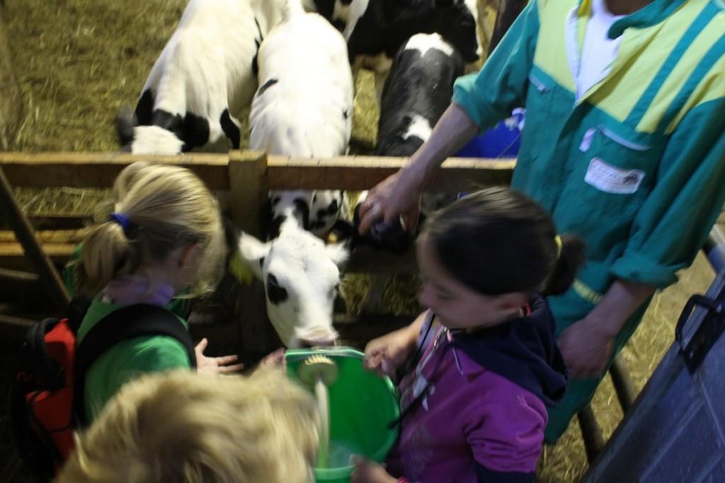 bimbi con vitellini