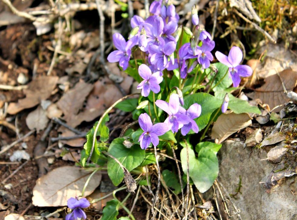 busatte-tempesta-primavera